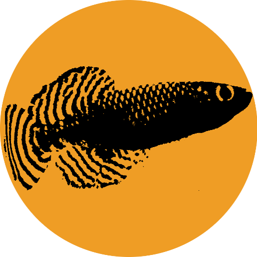 Logo of fish.filin.fi - silhouette image of the the African killifish Nothobranchius korthausae, on an orange background